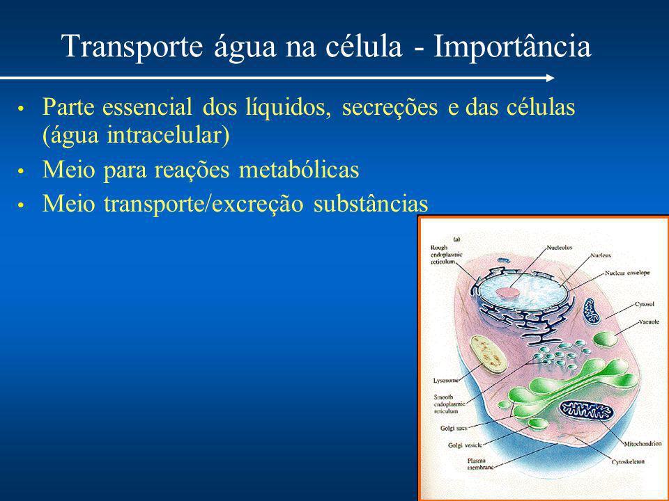Transporte água na célula - Importância Parte essencial dos líquidos, secreções e das células (água intracelular) Meio para reações metabólicas Meio transporte/excreção substâncias