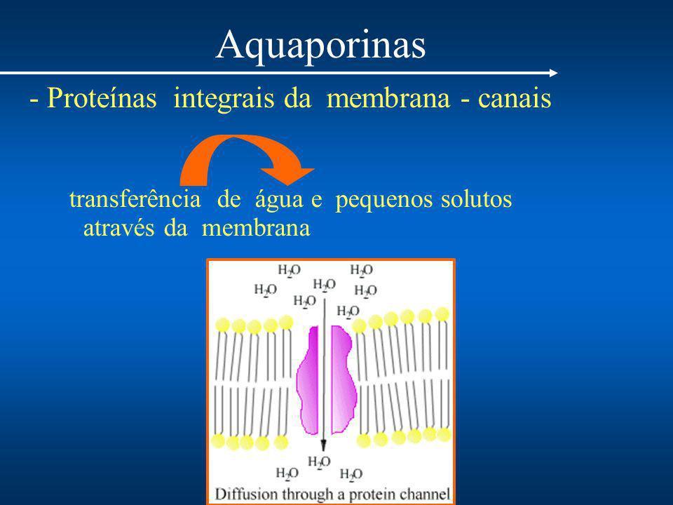 Aquaporinas - Proteínas integrais da membrana - canais transferência de água e pequenos solutos através da membrana