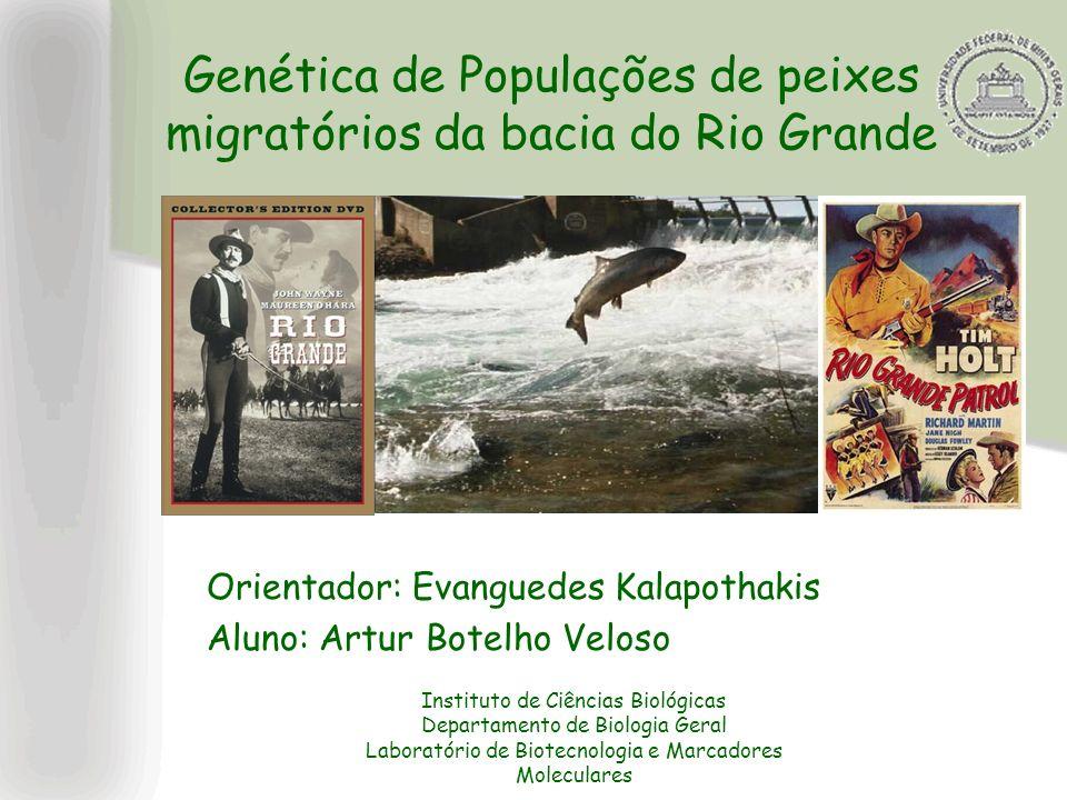 Genética de Populações de peixes migratórios da bacia do Rio Grande Orientador: Evanguedes Kalapothakis Aluno: Artur Botelho Veloso Instituto de Ciênc