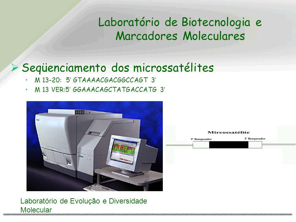 Laboratório de Biotecnologia e Marcadores Moleculares Seqüenciamento dos microssatélites M 13-20: 5 GTAAAACGACGGCCAGT 3 M 13 VER:5 GGAAACAGCTATGACCATG