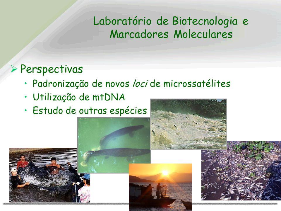 Laboratório de Biotecnologia e Marcadores Moleculares Perspectivas Padronização de novos loci de microssatélites Utilização de mtDNA Estudo de outras