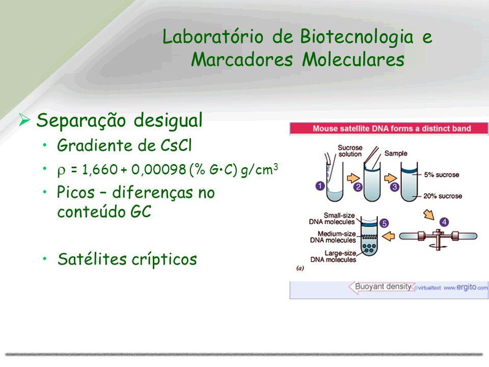 Laboratório de Biotecnologia e Marcadores Moleculares Separação desigual Gradiente de CsCl = 1,660 + 0,00098 (% GC) g/cm 3 Picos – diferenças no conte
