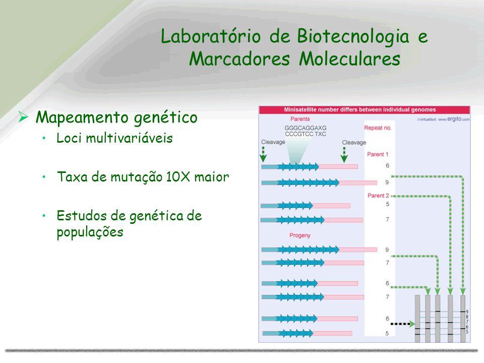 Laboratório de Biotecnologia e Marcadores Moleculares Mapeamento genético Loci multivariáveis Taxa de mutação 10X maior Estudos de genética de populaç