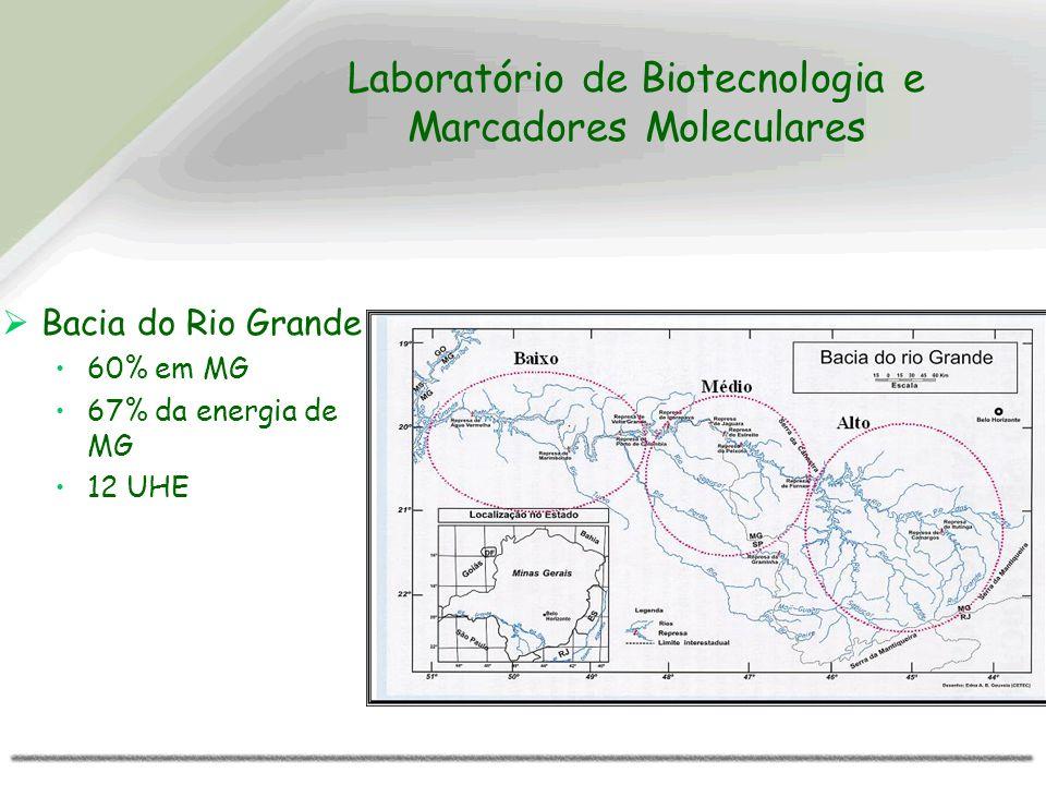 Laboratório de Biotecnologia e Marcadores Moleculares Bacia do Rio Grande 60% em MG 67% da energia de MG 12 UHE