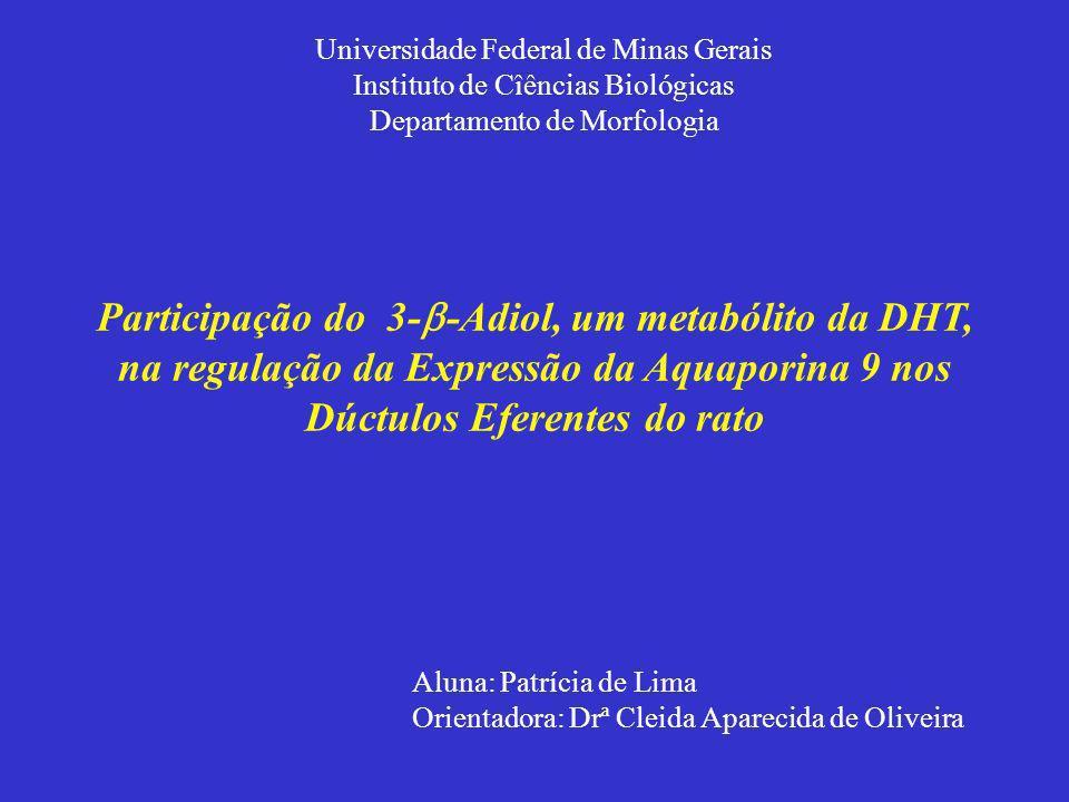 Participação do 3- -Adiol, um metabólito da DHT, na regulação da Expressão da Aquaporina 9 nos Dúctulos Eferentes do rato Aluna: Patrícia de Lima Orie