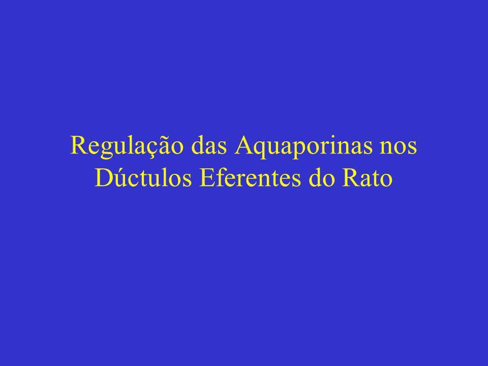 Regulação das Aquaporinas nos Dúctulos Eferentes do Rato