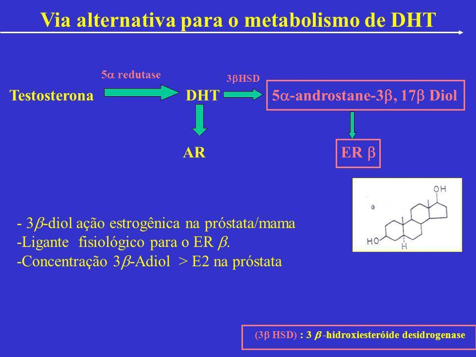 Via alternativa para o metabolismo de DHT Testosterona DHT 5 -androstane-3, 17 Diol AR ER 3 HSD 5 redutase (3 HSD) : 3 -hidroxiesteróide desidrogenase