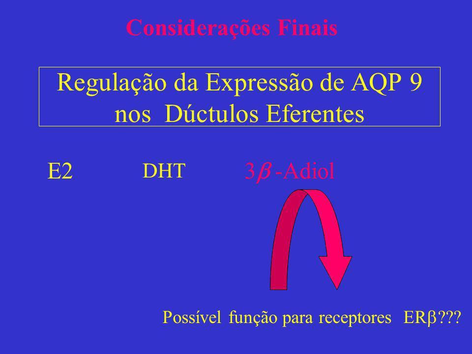 Regulação da Expressão de AQP 9 nos Dúctulos Eferentes E2 DHT 3 -Adiol Possível função para receptores ER ??? Considerações Finais