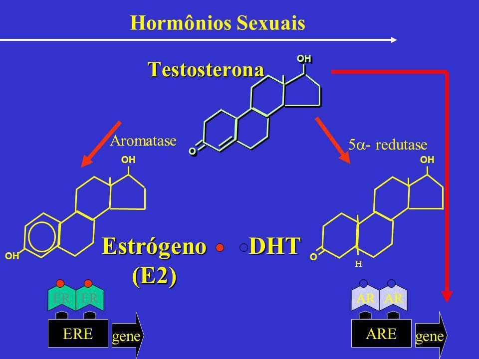 Hormônios Sexuais Testosterona Estrógeno(E2)DHT OH O OO OHOH Aromatase 5 - redutase H ERE gene ER ARE gene AR