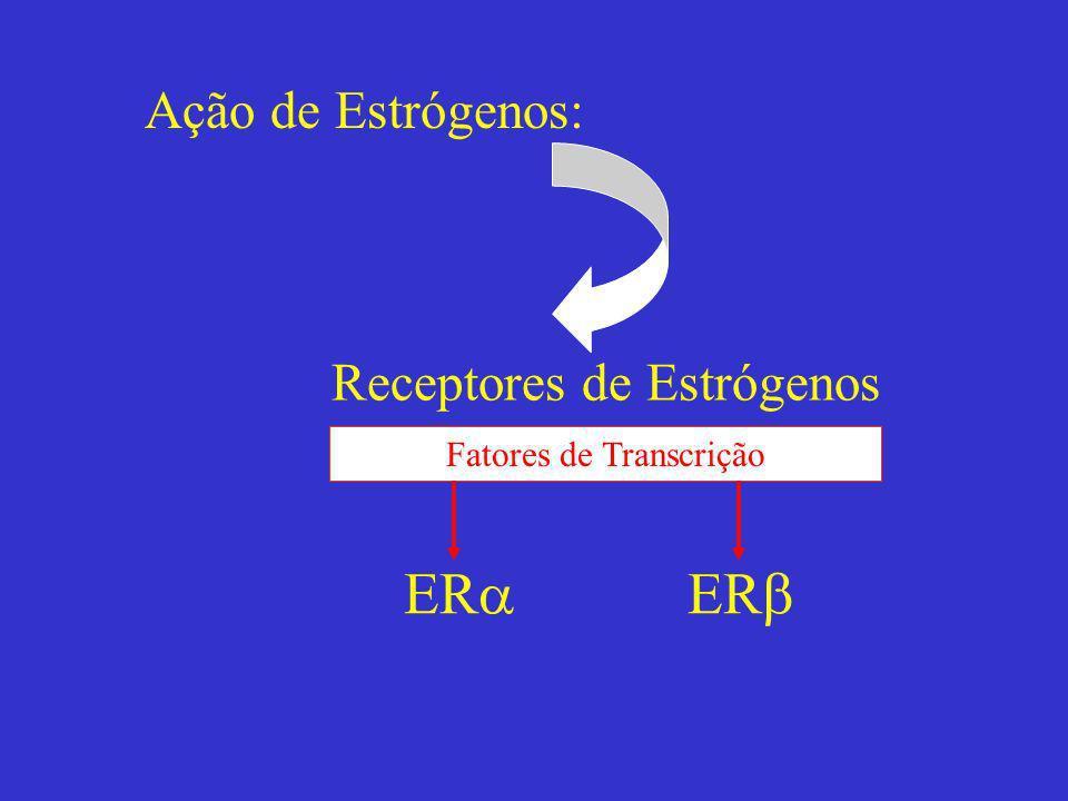 Ação de Estrógenos: Receptores de Estrógenos Fatores de Transcrição ER
