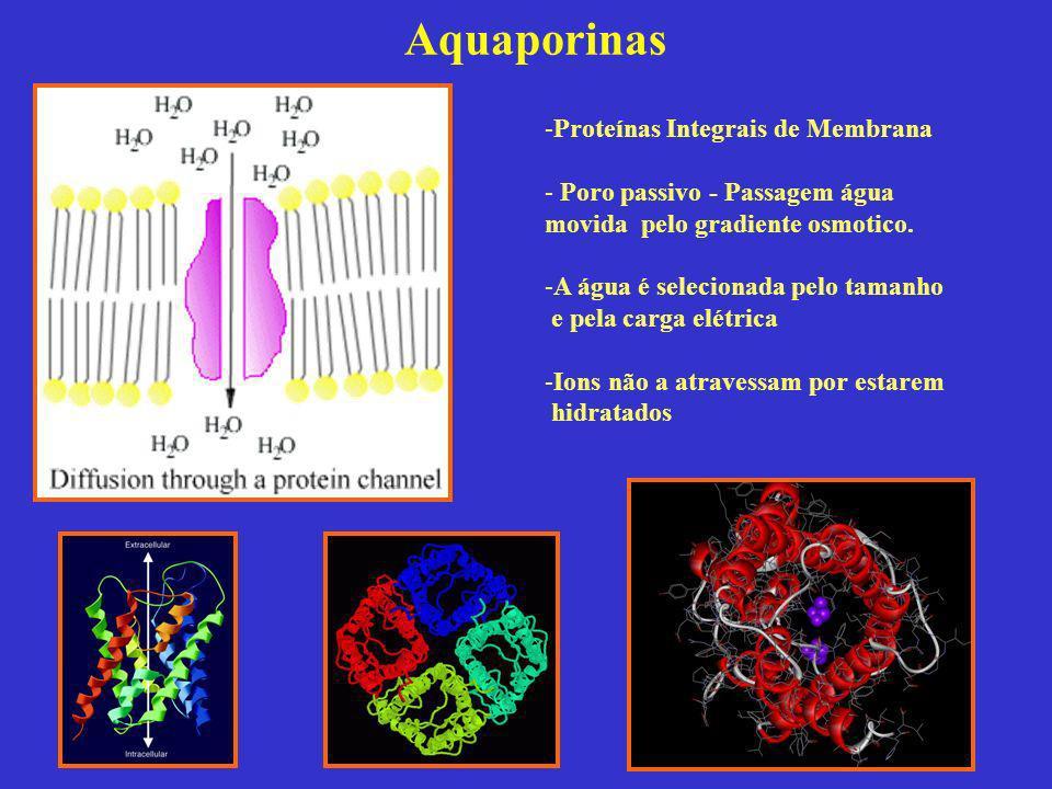 Aquaporinas -Proteínas Integrais de Membrana - Poro passivo - Passagem água movida pelo gradiente osmotico. -A água é selecionada pelo tamanho e pela