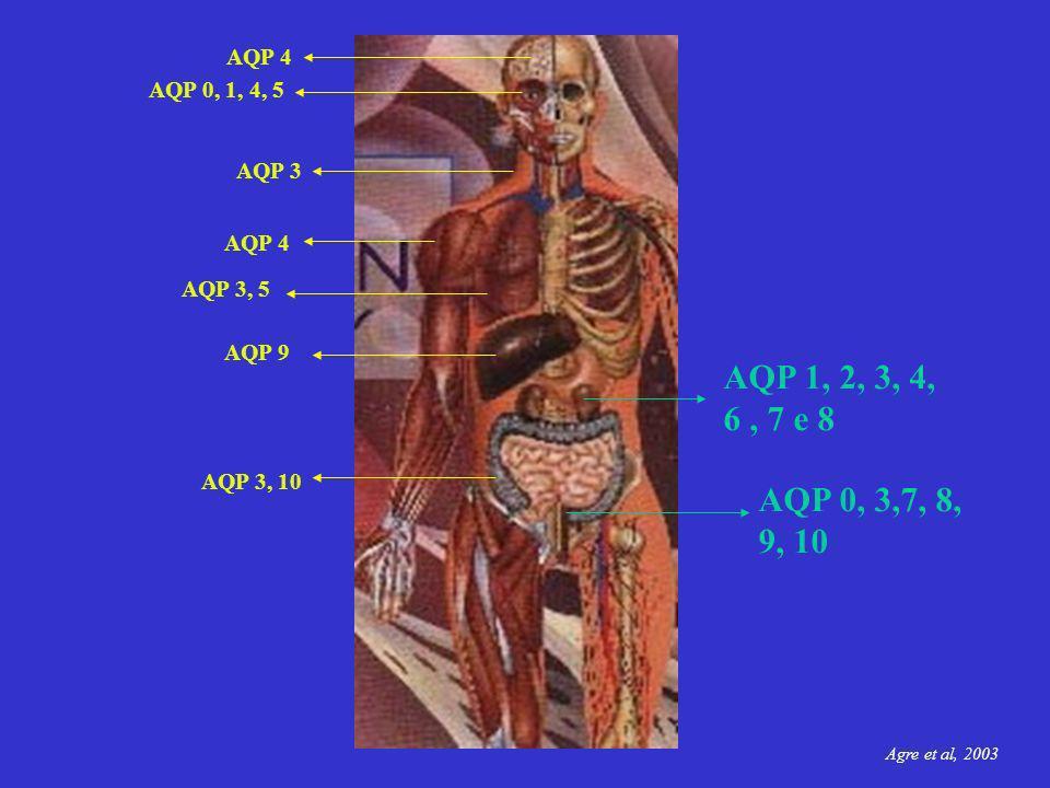 AQP 1, 2, 3, 4, 6, 7 e 8 AQP 4 AQP 0, 1, 4, 5 AQP 3 AQP 3, 5 AQP 3, 10 AQP 4 AQP 0, 3,7, 8, 9, 10 AQP 9 Agre et al, 2003