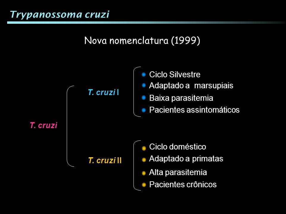T. cruzi T. cruzi I T. cruzi II Nova nomenclatura (1999) Pacientes assintomáticos Adaptado a marsupiais Ciclo Silvestre Baixa parasitemia Alta parasit