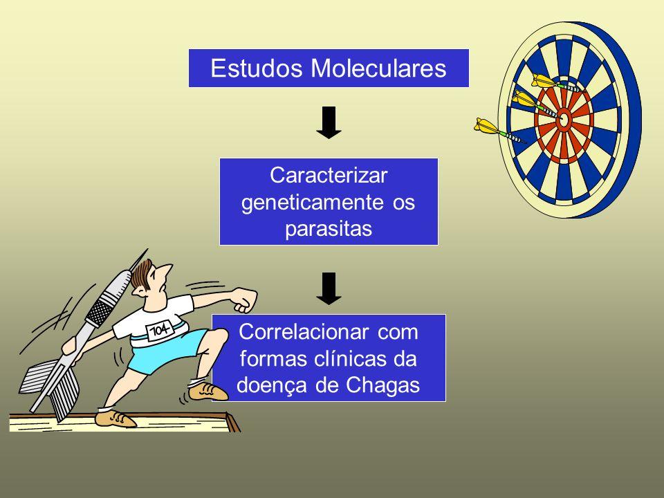 Estudos Moleculares Correlacionar com formas clínicas da doença de Chagas Caracterizar geneticamente os parasitas