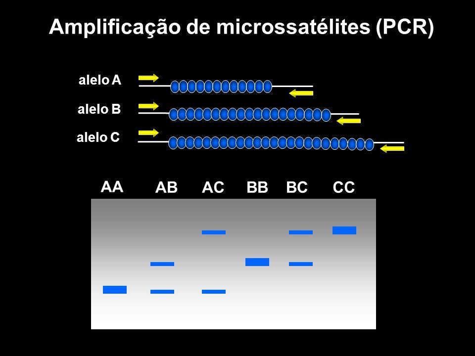 AA ABACBBBCCC Amplificação de microssatélites (PCR) alelo A alelo B alelo C