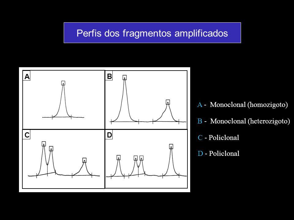 A B CD A - Monoclonal (homozigoto) B - Monoclonal (heterozigoto) C - Policlonal D - Policlonal Perfis dos fragmentos amplificados