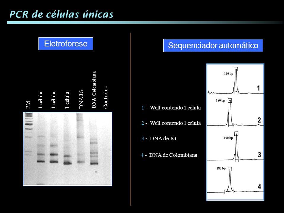 1 - Well contendo 1 célula 2 - Well contendo 1 célula 3 - DNA de JG 4 - DNA de Colombiana PCR de células únicas 1 célulaDNA JG DNA Colombiana 1 célula