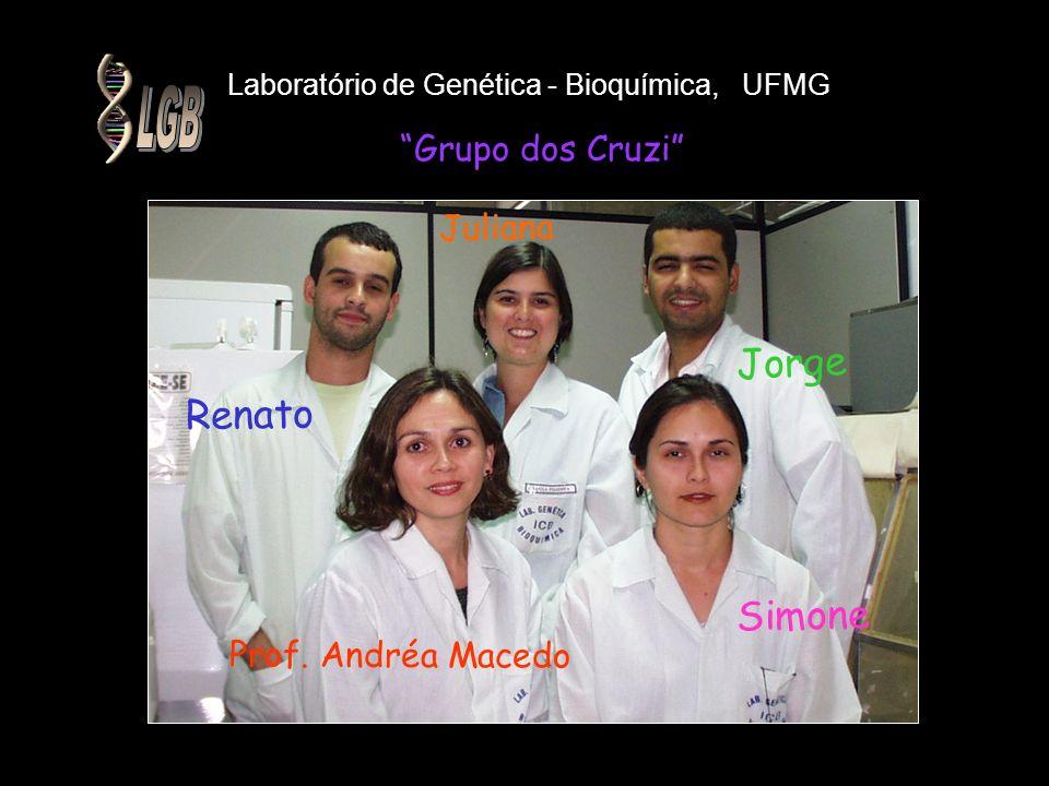 Laboratório de Genética - Bioquímica, UFMG Grupo dos Cruzi Jorge Simone Renato Prof. Andréa Macedo Juliana