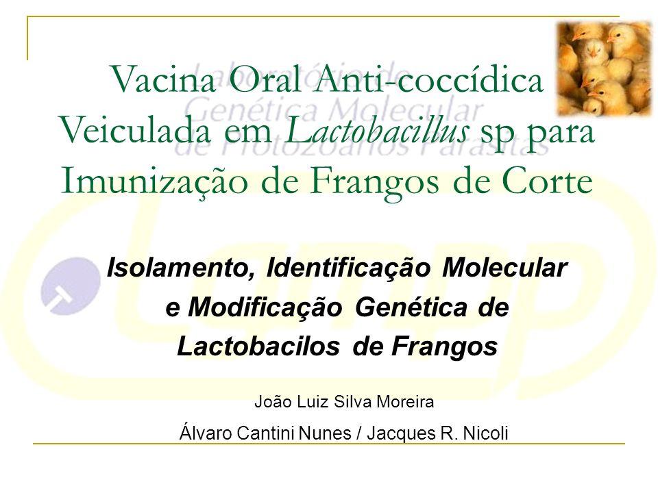 Vacina Oral Anti-coccídica Veiculada em Lactobacillus sp para Imunização de Frangos de Corte Isolamento, Identificação Molecular e Modificação Genétic