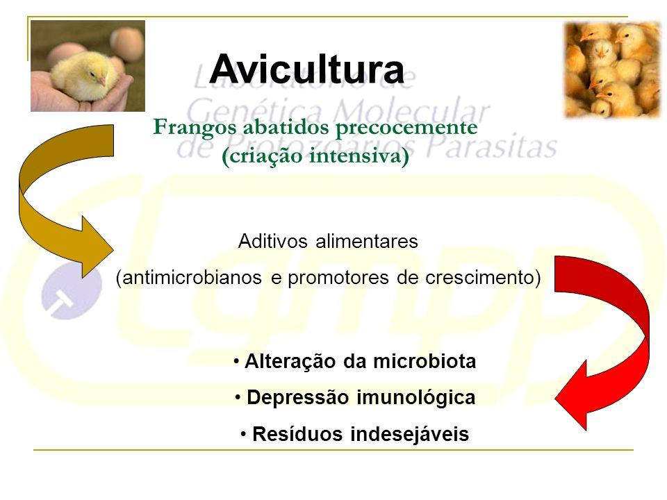 Frangos abatidos precocemente (criação intensiva) Aditivos alimentares (antimicrobianos e promotores de crescimento) Alteração da microbiota Depressão