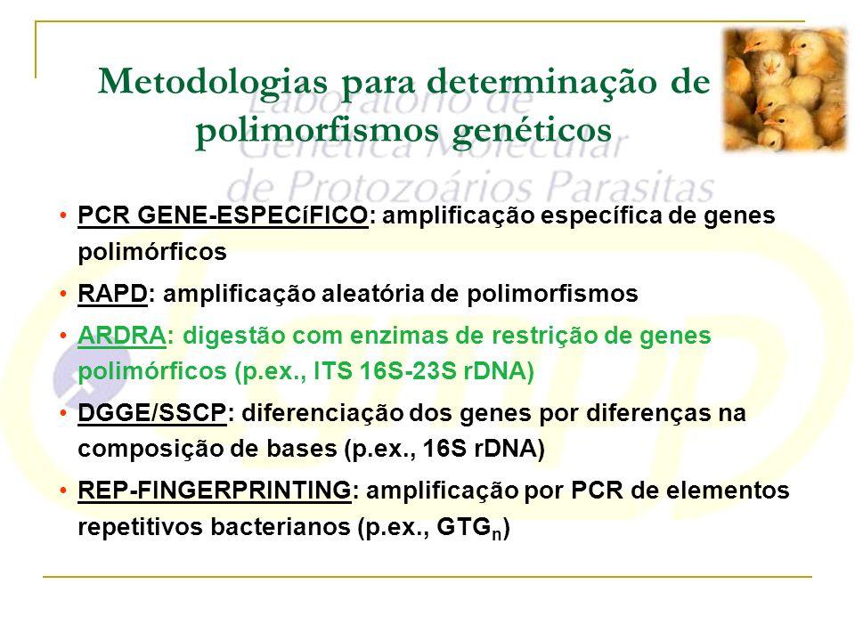 Metodologias para determinação de polimorfismos genéticos PCR GENE-ESPECíFICO: amplificação específica de genes polimórficos RAPD: amplificação aleató