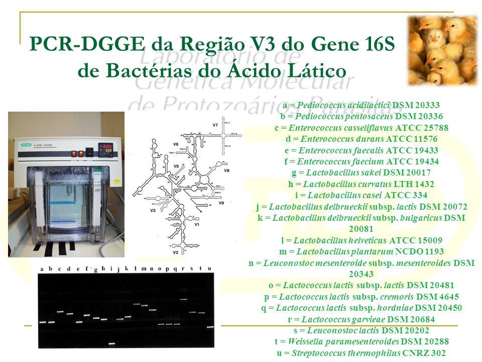 PCR-DGGE da Região V3 do Gene 16S de Bactérias do Ácido Lático a = Pediococcus acidilactici DSM 20333 b = Pediococcus pentosaceus DSM 20336 c = Entero
