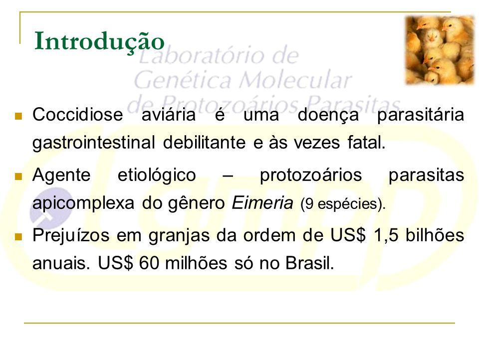 Introdução Coccidiose aviária é uma doença parasitária gastrointestinal debilitante e às vezes fatal. Agente etiológico – protozoários parasitas apico