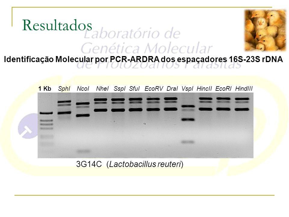 Resultados Identificação Molecular por PCR-ARDRA dos espaçadores 16S-23S rDNA 3G14C (Lactobacillus reuteri) 1 Kb SphI NcoI NheI SspI SfuI EcoRV DraI V