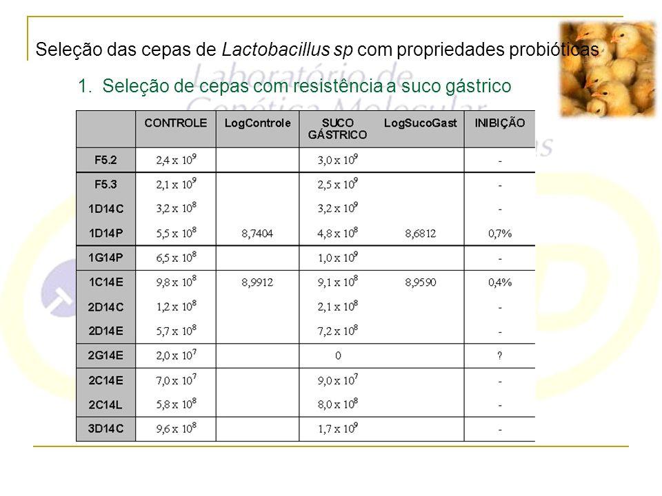 Seleção das cepas de Lactobacillus sp com propriedades probióticas 1.Seleção de cepas com resistência a suco gástrico