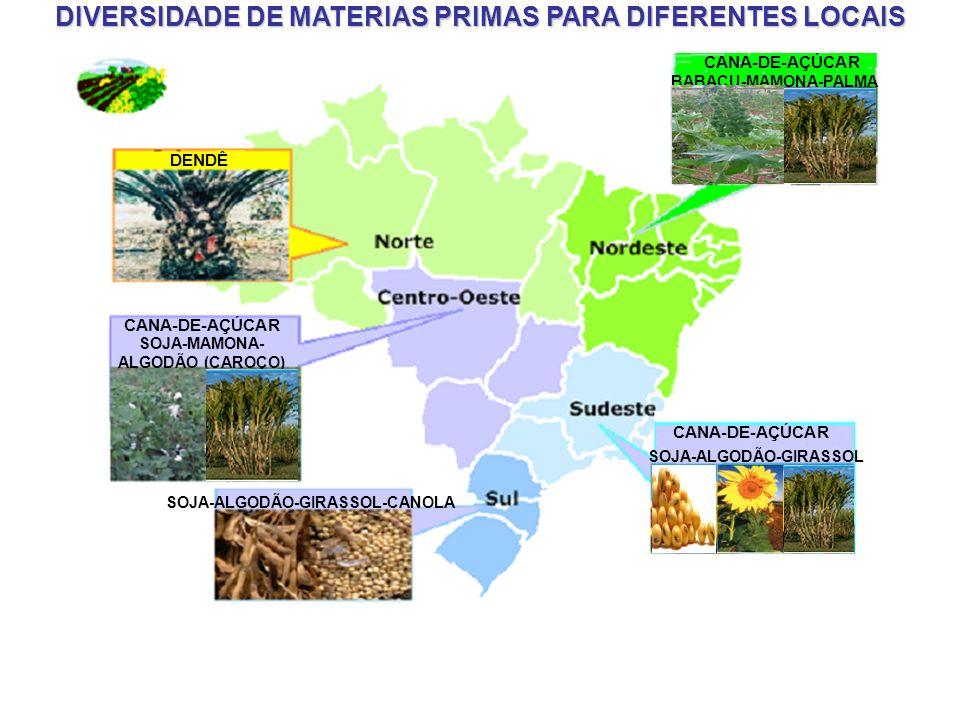 BIOCOMBUSTÍVEL O Brasil apresenta todas as condições para a criação de um programa nacional de produção de agroenergia sustentável e de grande porte.