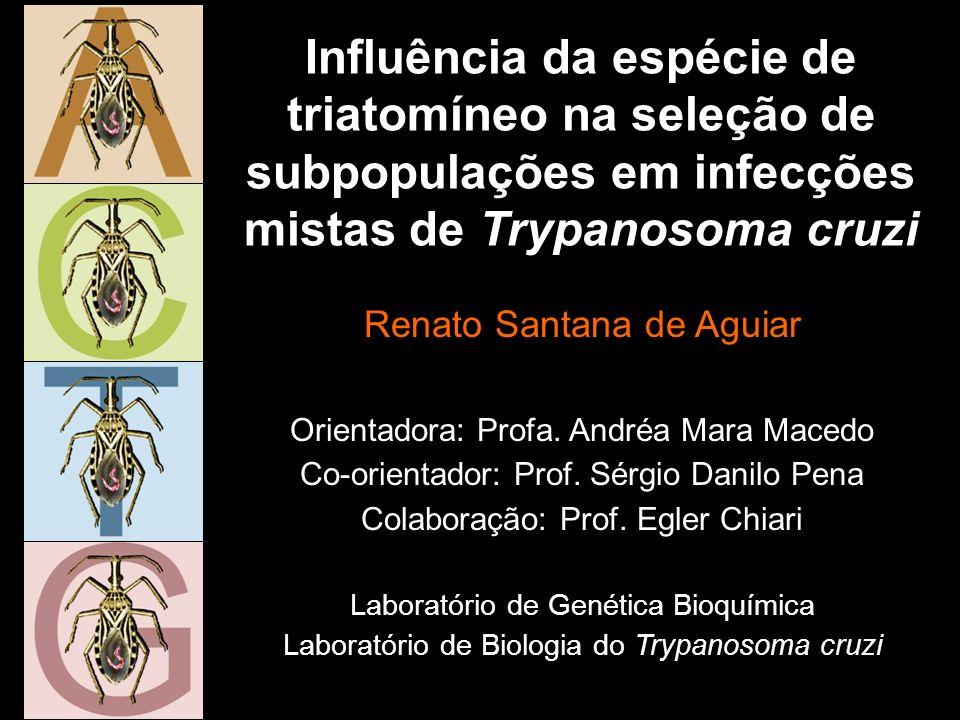 Padronização da metodologia SCLE10 D. maximus infectados com CL Brener (60 dias de infecção)