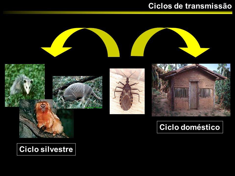 Avaliar a influência de espécies de triatomíneos provenientes de diferentes ecótopos na seleção de sub- populações em infecções mistas de T.