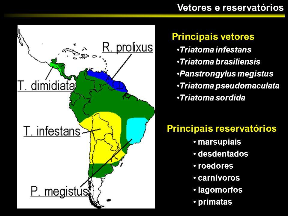 Infecções mistas em triatomímeos Reservatórios Número de cepas MonoclonalMulticlonalTotal triatomíneos silvestres 3 (37,5%)5 (62,5%)8 mamíferos silvestres 6 (100 %)-6 humanos12 (85,7%)2 (14,3%)14 total21 (75%)7 (25%)28