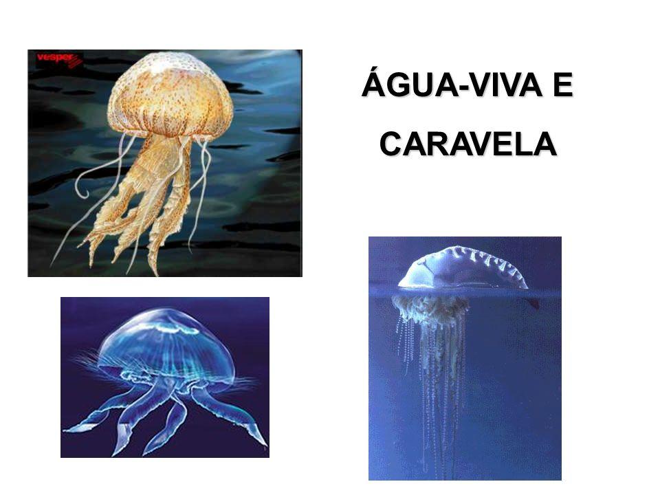 ÁGUA-VIVA E CARAVELA