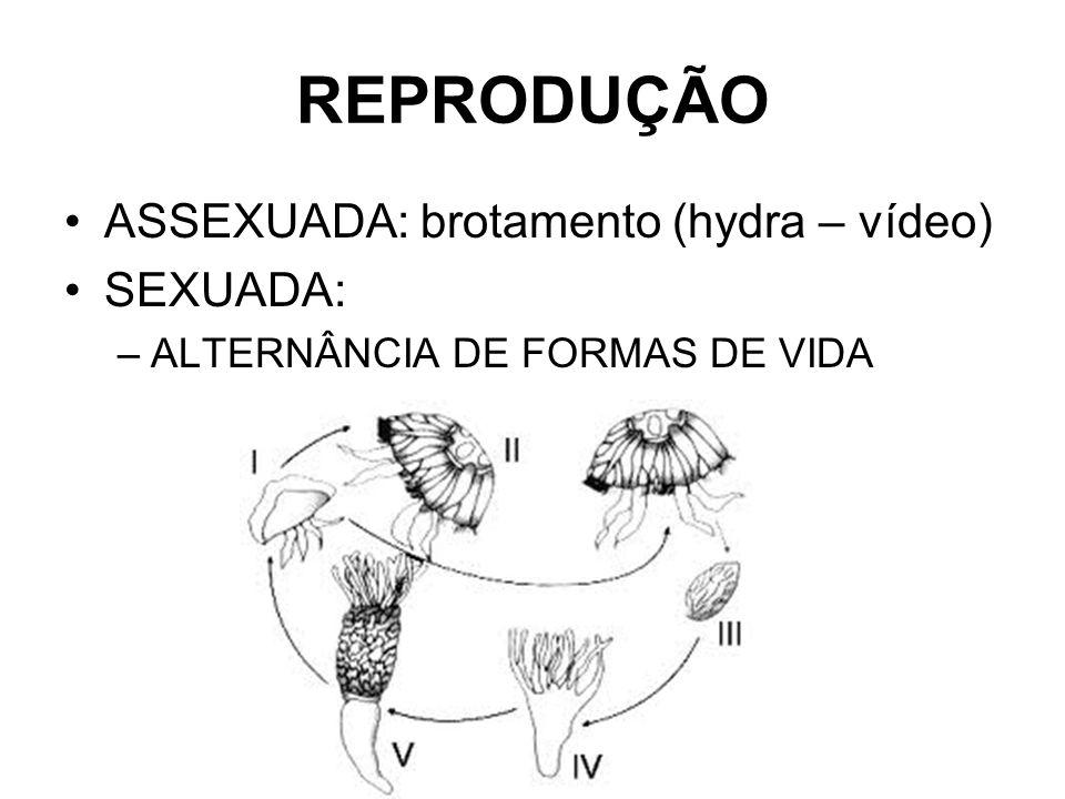 REPRODUÇÃO ASSEXUADA: brotamento (hydra – vídeo) SEXUADA: –ALTERNÂNCIA DE FORMAS DE VIDA
