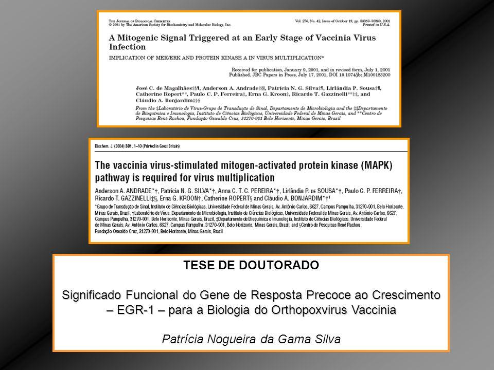 TESE DE DOUTORADO Significado Funcional do Gene de Resposta Precoce ao Crescimento – EGR-1 – para a Biologia do Orthopoxvirus Vaccinia Patrícia Nogueira da Gama Silva