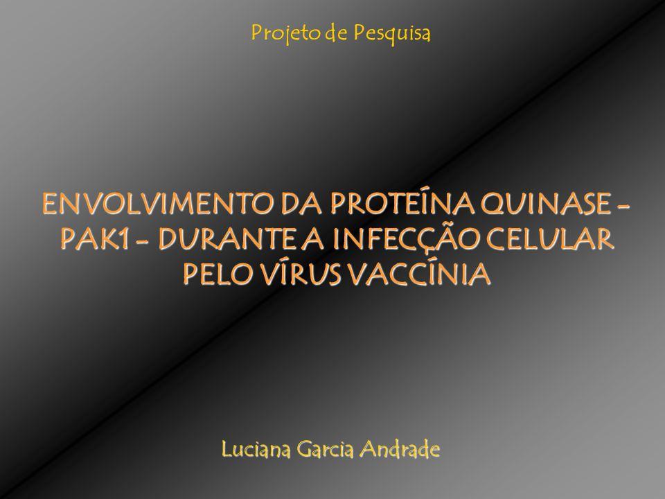 ENVOLVIMENTO DA PROTEÍNA QUINASE - PAK1 - DURANTE A INFECÇÃO CELULAR PELO VÍRUS VACCÍNIA Luciana Garcia Andrade Projeto de Pesquisa