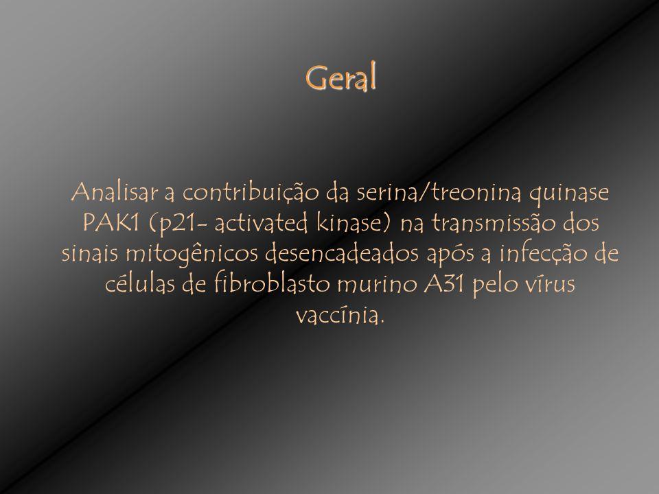 Geral Analisar a contribuição da serina/treonina quinase PAK1 (p21- activated kinase) na transmissão dos sinais mitogênicos desencadeados após a infecção de células de fibroblasto murino A31 pelo vírus vaccínia.