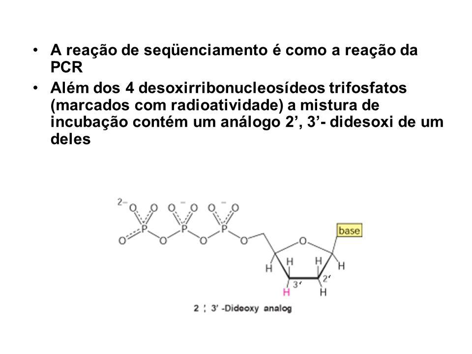 A reação de seqüenciamento é como a reação da PCR Além dos 4 desoxirribonucleosídeos trifosfatos (marcados com radioatividade) a mistura de incubação
