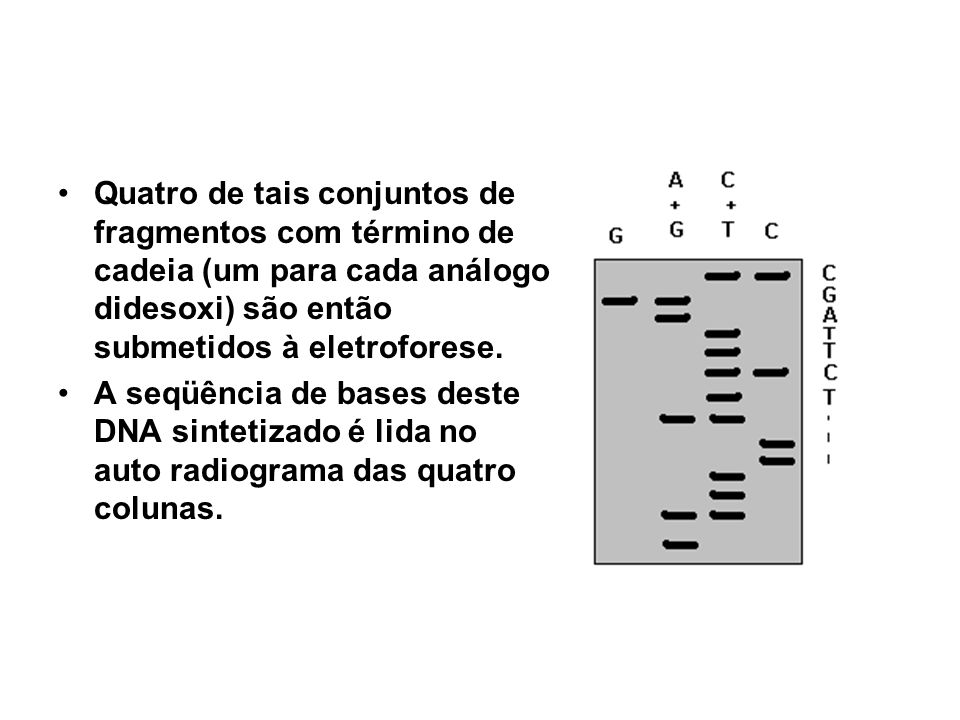 Quatro de tais conjuntos de fragmentos com término de cadeia (um para cada análogo didesoxi) são então submetidos à eletroforese. A seqüência de bases