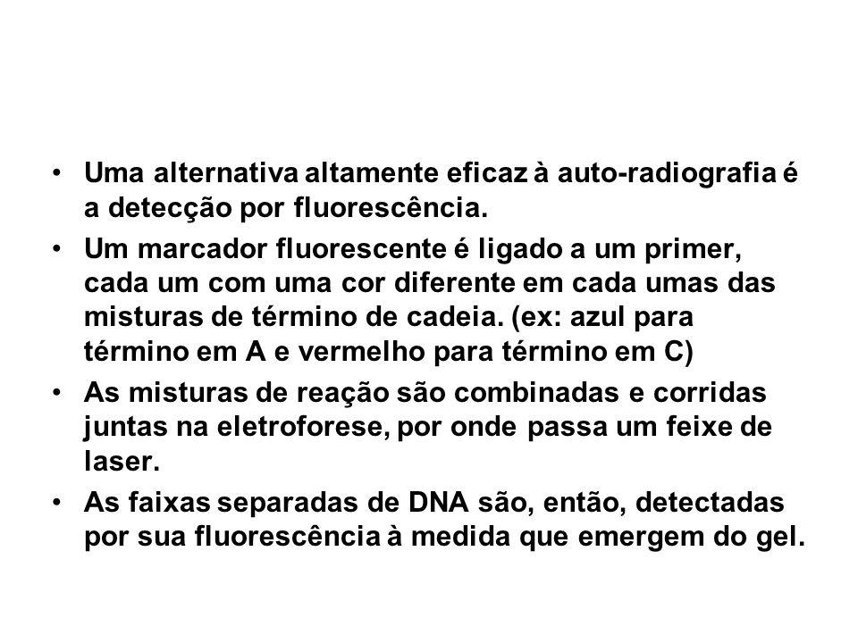Uma alternativa altamente eficaz à auto-radiografia é a detecção por fluorescência. Um marcador fluorescente é ligado a um primer, cada um com uma cor