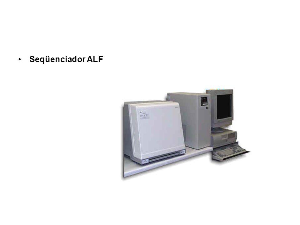 Imagem do gel no monitor do seqüenciador