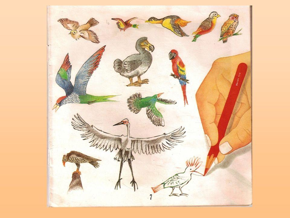 4º A - GABRIEL ALVES Eu gostei da parte quando Deus criou as aves porque ele criou minhas aves favoritas.