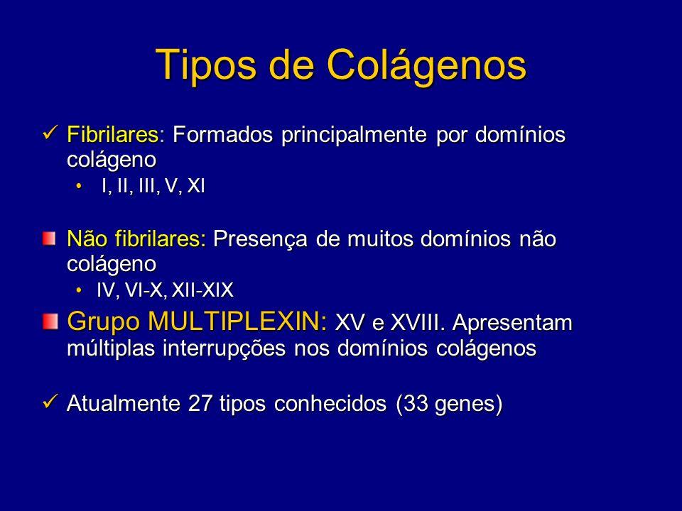 Tipos de Colágenos Fibrilares: Formados principalmente por domínios colágeno Fibrilares: Formados principalmente por domínios colágeno I, II, III, V,