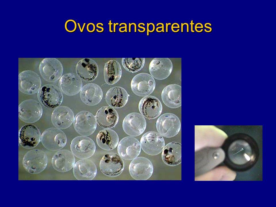 Ovos transparentes