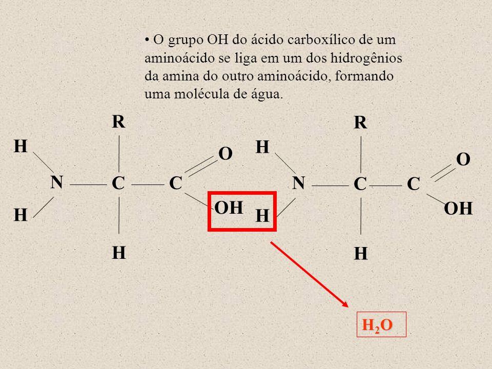 N H R C OH O H H C N H R C O H H C H2OH2OH2OH2O O grupo OH do ácido carboxílico de um aminoácido se liga em um dos hidrogênios da amina do outro amino