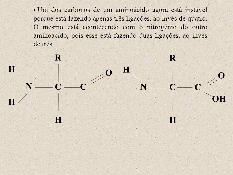 N H R C O H H N H R C OH O H C C Um dos carbonos de um aminoácido agora está instável porque está fazendo apenas três ligações, ao invés de quatro. O