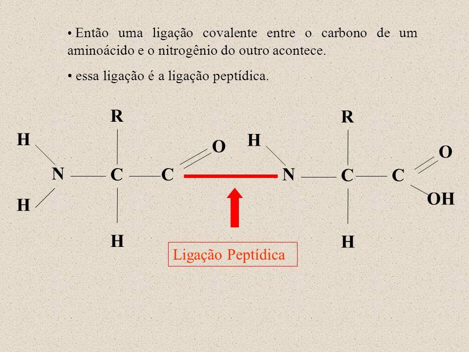 N H R C O H H N H R C OH O H C C Ligação Peptídica Então uma ligação covalente entre o carbono de um aminoácido e o nitrogênio do outro acontece. essa