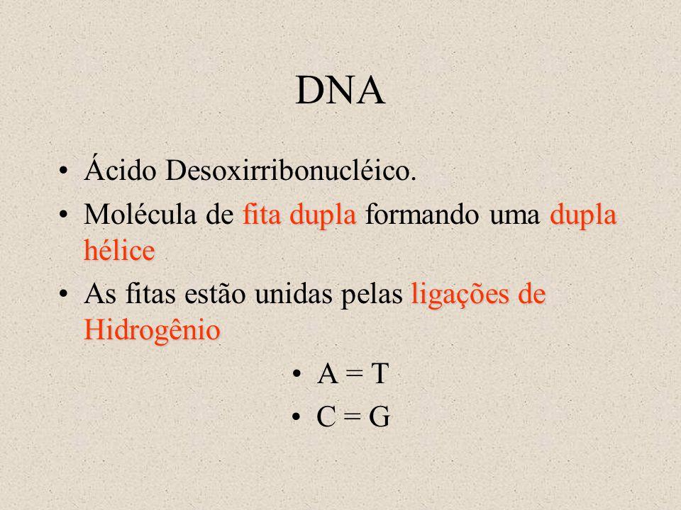 DNA Ácido Desoxirribonucléico. fita dupladupla héliceMolécula de fita dupla formando uma dupla hélice ligações de HidrogênioAs fitas estão unidas pela