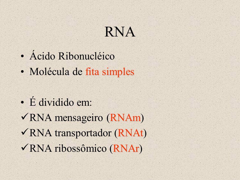 RNA Ácido Ribonucléico fita simplesMolécula de fita simples É dividido em: RNAm RNA mensageiro (RNAm) RNAt RNA transportador (RNAt) RNAr RNA ribossômi